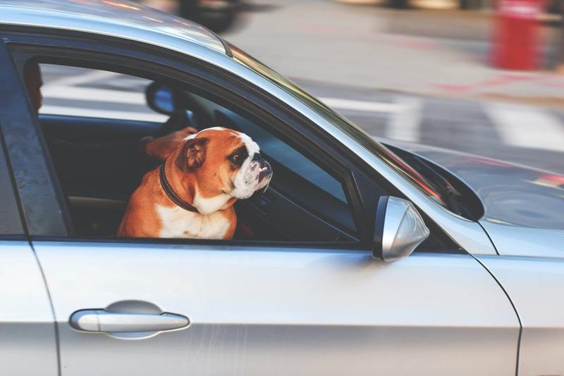 Accesorios para viajar con perros en el coche